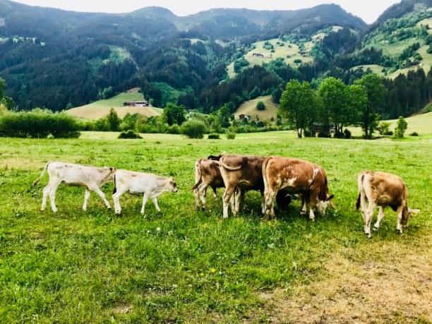 Kurztrip Fügen im Zillertal (Stadt), Tirol, Österreich, Zellberg