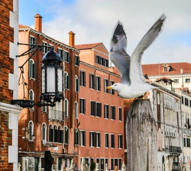 Kurztrip Venedig (Stadt), Venetien, Italien, Typisch Venedig!
