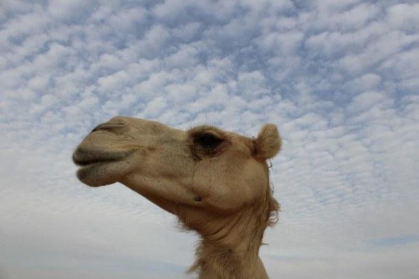 1 Woche Vereinigte Arabische Emirate » Abu Dhabi